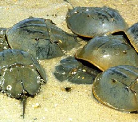 02_Crabs.png